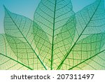 green leaves | Shutterstock . vector #207311497