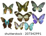isolated butterfly | Shutterstock . vector #207342991