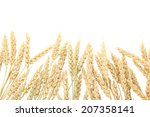 wheat ears isolated on white   Shutterstock . vector #207358141