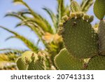 Leafs Of A Large Cactus With...