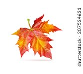 Red Maple Autumn Leaf Isolated...