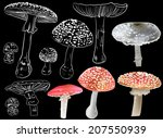 illustration with fly agaric... | Shutterstock .eps vector #207550939