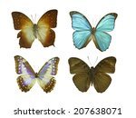 isolated butterfly | Shutterstock . vector #207638071
