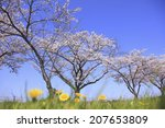dandelion and cherry in nara... | Shutterstock . vector #207653809