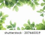 Frame Of Fresh Green Leaves
