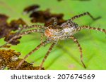 spider perched on a lotus leaf  ... | Shutterstock . vector #207674569
