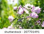 mallows | Shutterstock . vector #207701491