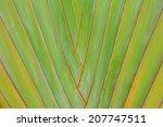 Patterns Of Stem Palm Trees.