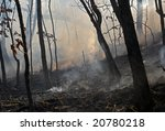 A Fire In Leafy Forest. Autumn.