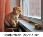 red cat is sitting next to the... | Shutterstock . vector #207915709