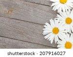 Daisy Camomile Flowers On...