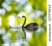 Image Of Black And White Swans...
