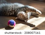 Stock photo gray cat plays with a toy 208007161