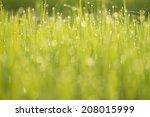natural green background  | Shutterstock . vector #208015999