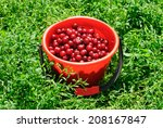 red cherries on red bucket and... | Shutterstock . vector #208167847