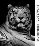 tiger   Shutterstock . vector #208179145
