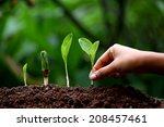 plant growth new life | Shutterstock . vector #208457461