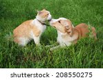 Stock photo ginger dog and the cat lying on the grass 208550275