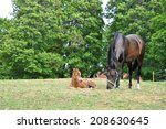 four day old foal with his... | Shutterstock . vector #208630645
