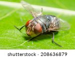 blow fly  carrion fly ... | Shutterstock . vector #208636879