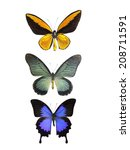 isolated butterfly | Shutterstock . vector #208711591