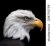 head of bald eagle  haliaeetus... | Shutterstock .eps vector #208753759