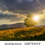 mountain summer landscape. few trees on hillside meadow at sunset with rainbow - stock photo