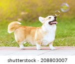 Stock photo happy fun dog and soap bubbles 208803007