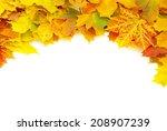 autumn maple leafs  | Shutterstock . vector #208907239