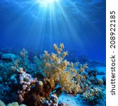 Ocean Underwater Coral Reef In...