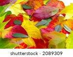 autumn leaf colors   Shutterstock . vector #2089309