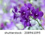 Violet Purple Orchid Bloom Wit...