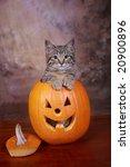 Tabby Kitten In A Jack O Latern