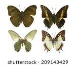 butterfly on white | Shutterstock . vector #209143429