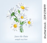 bouquet camomile with ribbon.... | Shutterstock .eps vector #209159899