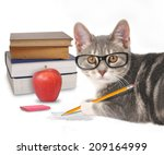 Stock photo a gray cat is holding a pencil with a scribble and books on a white isolated background for a 209164999