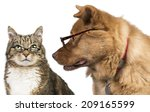 Cat And Dog With Glasses. Dog...