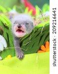Two Weeks Old Cute Ferret Baby...