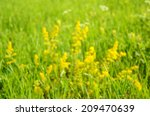 photo of a defocused field for... | Shutterstock . vector #209470639