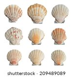 Collection Of Seashells...