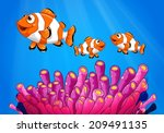 illustration of the clownfishes ... | Shutterstock .eps vector #209491135