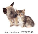 Stock photo a cairn terrier puppy sniffing a kitten 20949358