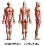anathomy | Shutterstock . vector #209505487