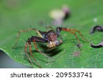 jumping spiders. | Shutterstock . vector #209533741