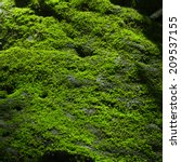Light Shining To  Moss On The...