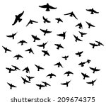 bohemian waxwing in flight... | Shutterstock .eps vector #209674375