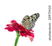 Stock photo tropical butterfly and red flower 20975410