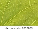 green leaf 1 1 macro   great... | Shutterstock . vector #2098035
