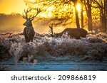 red deer | Shutterstock . vector #209866819