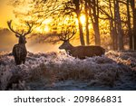 red deer | Shutterstock . vector #209866831